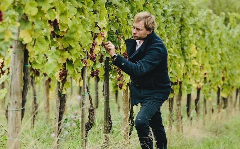Marc Desom dans les vignes
